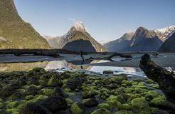 Milford Sound, Mitre Peak. Moss covered rocks on the shoreline in Milford Sounds National Park, New Zealand stock photography