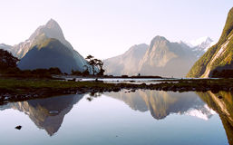 Milford Sound, New Zealand. The beautiful fjord Milford sound reflecting in the sea, New Zealand Royalty Free Stock Image