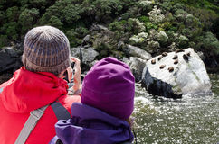 Milford Sound - New Zealand. MILFORD SOUND,NZ - JAN 14:Visitors watches Seals in Milford Sound on Jan 14 2014.It has been judged the world's top travel Stock Photos