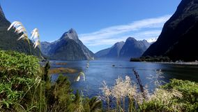 Milford Sound no verão, Nova Zelândia fotografia de stock royalty free