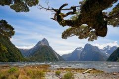 Milford Sound, NZ стоковое изображение rf