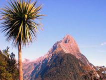 Milford Sound Palmtree. Palmtree at Milford Sound, New Zealand Stock Photo