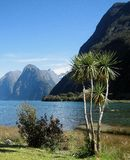 Milford Sound Palmtree Stockfotos