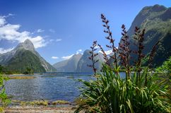 Milford Sound In qualche luogo in Nuova Zelanda Immagine Stock Libera da Diritti