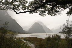 Milford sound view. Beautiful Milford Sound from the shore framed by trees Royalty Free Stock Image