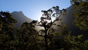 Milford Track, Fiordland, New Zealand Stock Images