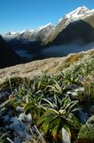 Milford track landscape. The Milford Track, New Zealand Stock Image