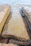 75 milhão anos de Shell fóssil velho Fotografia de Stock Royalty Free