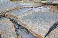 75 milhão anos de Shell fóssil velho Foto de Stock Royalty Free