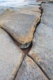75 milhão anos de Shell fóssil velho Imagens de Stock Royalty Free