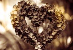 Milhão ruscifolia Decne de HeartDischidia Becc ex sob a forma do coração dado forma planta decorativa Tom do Sepia Imagem de Stock Royalty Free