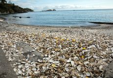 Milhares de escudos vazios das ostras comidas rejeitadas no assoalho de mar em Cancale, famoso para explora??es agr?colas da ostr imagem de stock