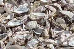 Milhares de escudos vazios das ostras comidas rejeitadas no assoalho de mar em Cancale, famoso para explora??es agr?colas da ostr fotos de stock