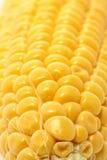 Milho Fotos de Stock