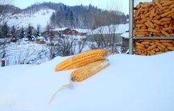 Milho Foto de Stock