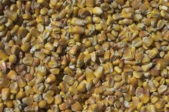 Milho Imagem de Stock