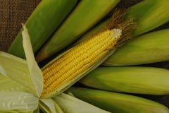 Milho amarelo Imagem de Stock