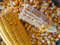 Milho amarelo Imagens de Stock Royalty Free