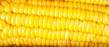 Milho amarelo do close-up Imagem de Stock