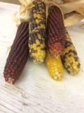 Milho colorido com cores diferentes fotografia de stock