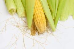 Milho com com shell macio-verde Imagens de Stock