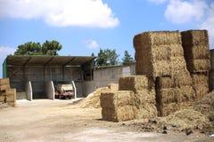 Milho conservado em estoque da luz do dia da exploração agrícola do feno Fotos de Stock