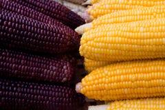 Milho de duas cores Fotografia de Stock