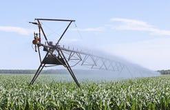 Milho de irrigação Fotografia de Stock Royalty Free