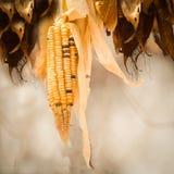 Milho de semente africano da herdade Imagens de Stock