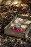 Milho do alimento de pássaro Fotografia de Stock Royalty Free