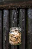 Milho do alimento de pássaro em um frasco de vidro Imagem de Stock