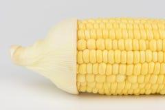 Milho do close up isolado em um fundo branco fotografia de stock royalty free