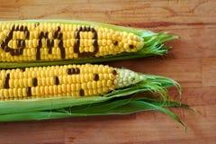 Milho do Gmo Foto de Stock Royalty Free