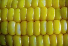 Milho doce amarelo, imagem para o fundo Imagens de Stock