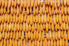 Milho doce dos produtos agrícolas na exploração agrícola Foto de Stock
