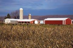 Milho e edifícios de exploração agrícola vermelhos Fotografia de Stock Royalty Free