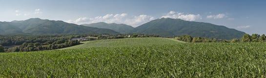 Milho e montanhas foto de stock royalty free