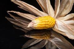 Milho, espiga, amarelo, decoração, ainda vida, eleganc Fotos de Stock Royalty Free