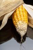 Milho, espiga, amarelo, decoração, ainda vida, eleganc Fotografia de Stock