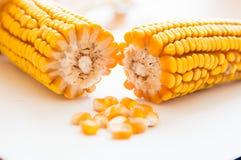 Milho, espiga, cereal, grões foto de stock royalty free