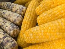 Milho fervido Imagem de Stock
