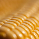 Milho fresco Fotos de Stock