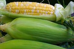 Milho fresco da colheita nova Foto de Stock