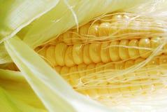 Milho fresco em cob3 Imagem de Stock