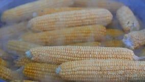 Milho fresco, suculento, a favor do meio ambiente do cozimento sem inseticidas e netrates em uma grande bandeja para o alimento d video estoque