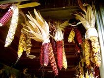 Milho indiano Imagens de Stock Royalty Free