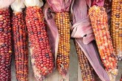 Milho indiano brilhante e colorido Foto de Stock Royalty Free