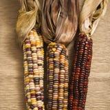 Milho indiano colorido imagem de stock