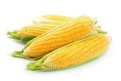 Milho isolado Imagens de Stock