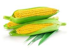 Milho isolado no branco Imagem de Stock Royalty Free